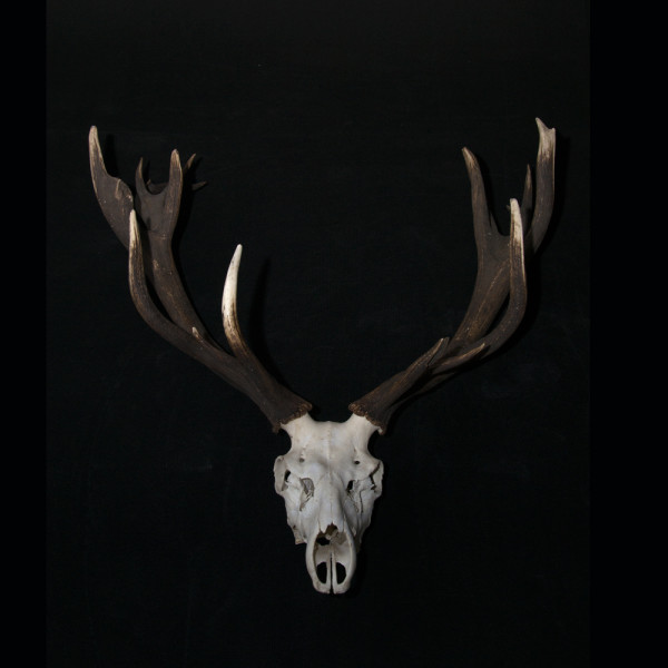 A11_Antlers-2-full