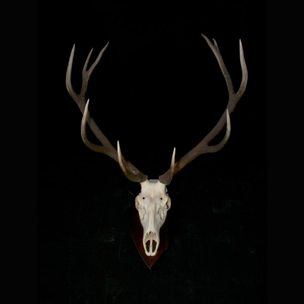 A11_Antlers-3-full